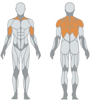 1HP504A-muscoli