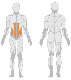 1HP565-muscoli
